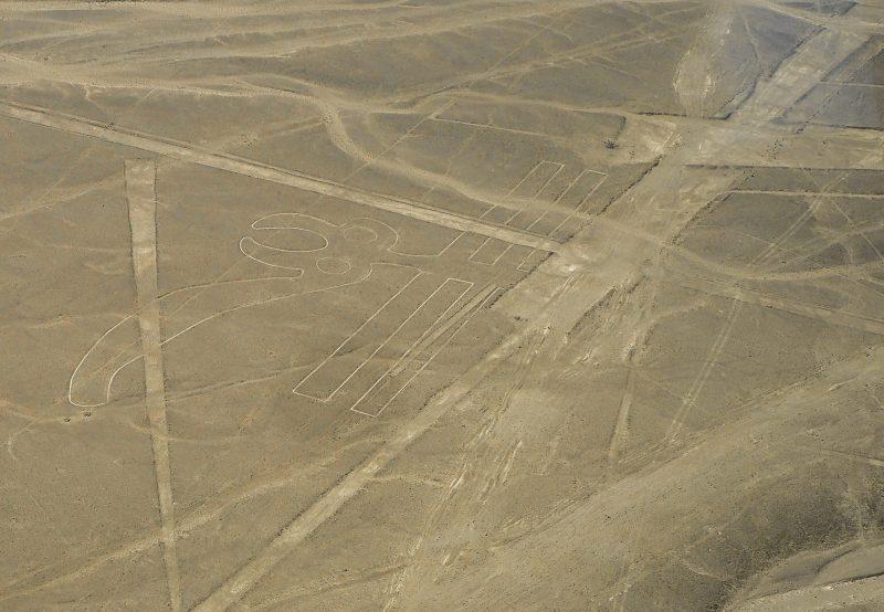 Pappagallo Linee di Nazca