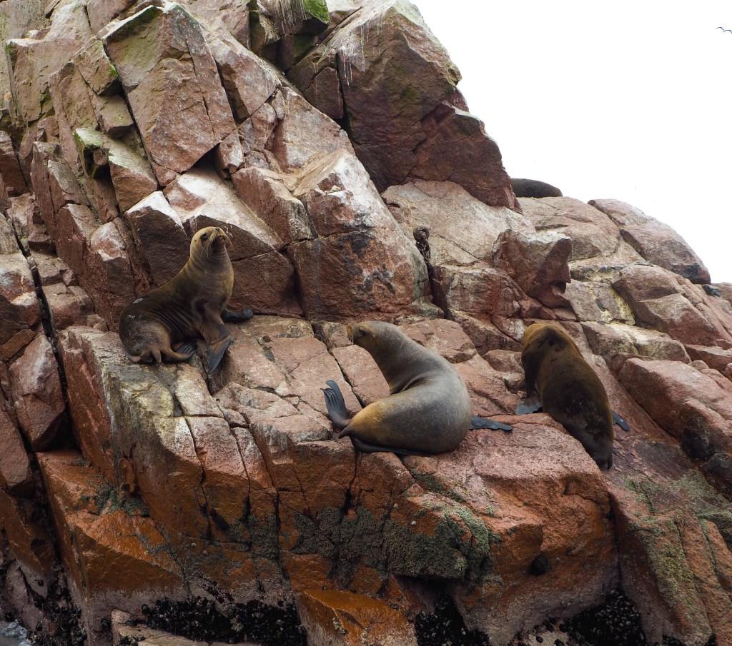 Fauna isole Ballestas