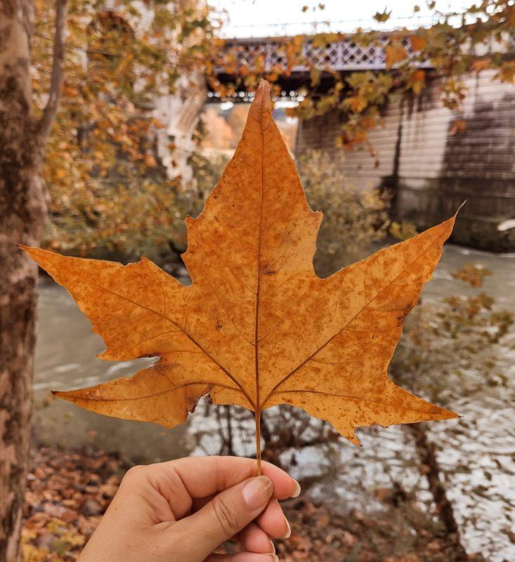 Foglie d'autunno a Mabon