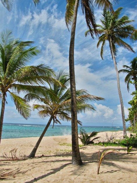 spiaggia La Feulliere Marie Galante