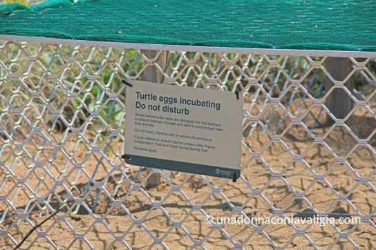 Spiaggia di Mon Repos uova deposte di tartarughe