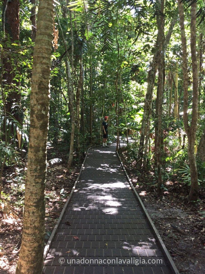 Foresta tropicale Daintree Queensalnd