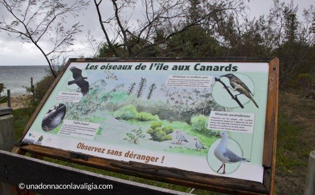 ile aux canards nuova caledonia noumea