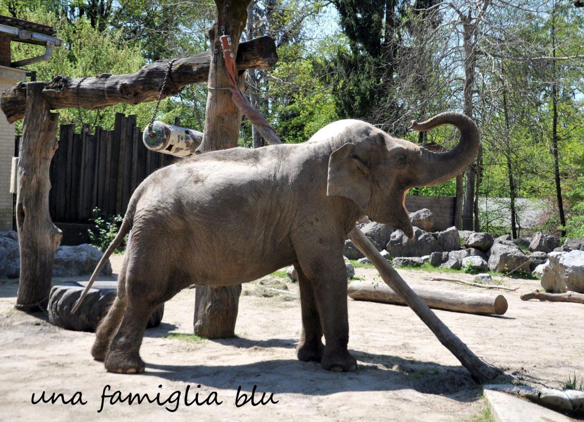 Una giornata allo zoo di Lubiana con i bambini