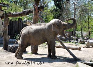 zoo Lubiana elefante