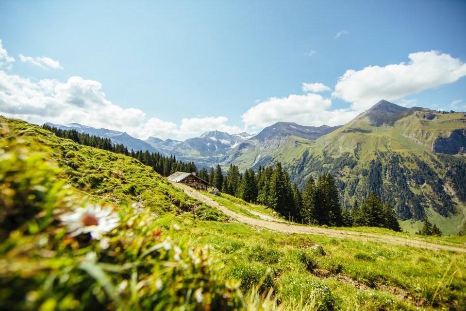 Almsommer (c) SalzburgerLand Tourismus