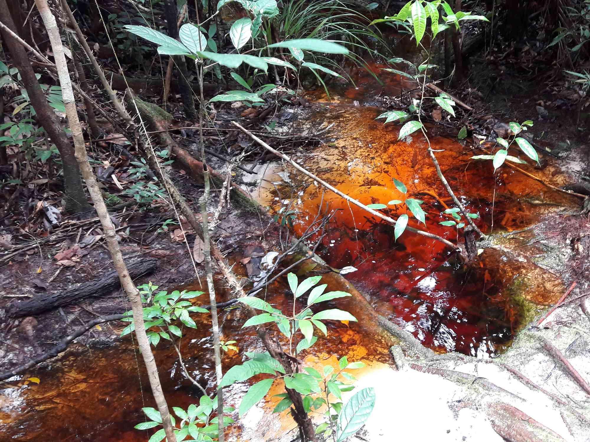 Whats the terrain like in Bako National Park, Borneo?