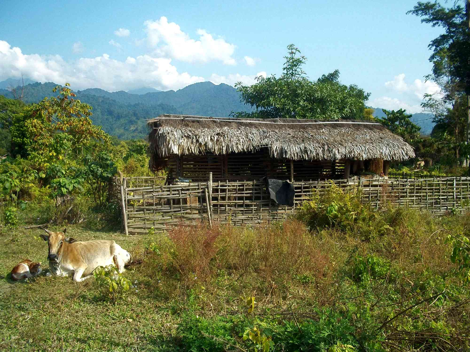 What are places to see in Roing, Arunachal Pradesh of northeast India?