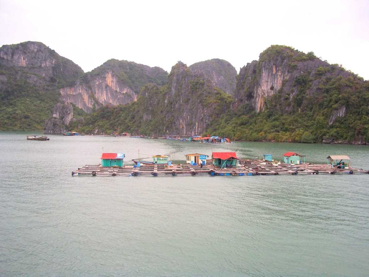 What activities are part of Halong Bay Cruise?