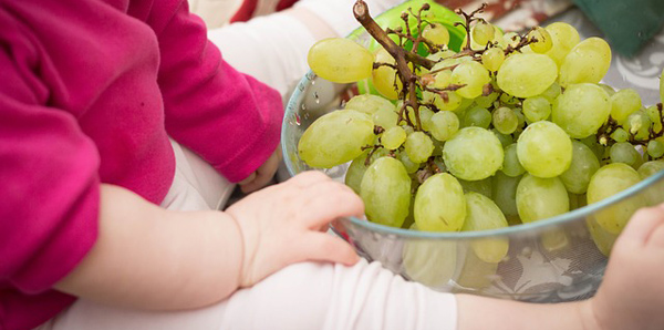 grapes-531207_640