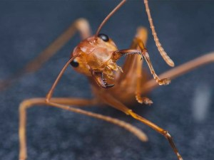 insectos-comestibles