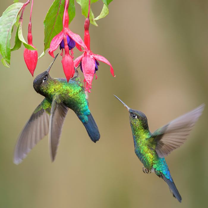 Resultado de imagen para colibries unam