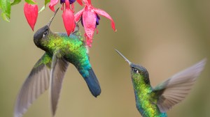 Colibri-en-reserva-UNAMGlobalR