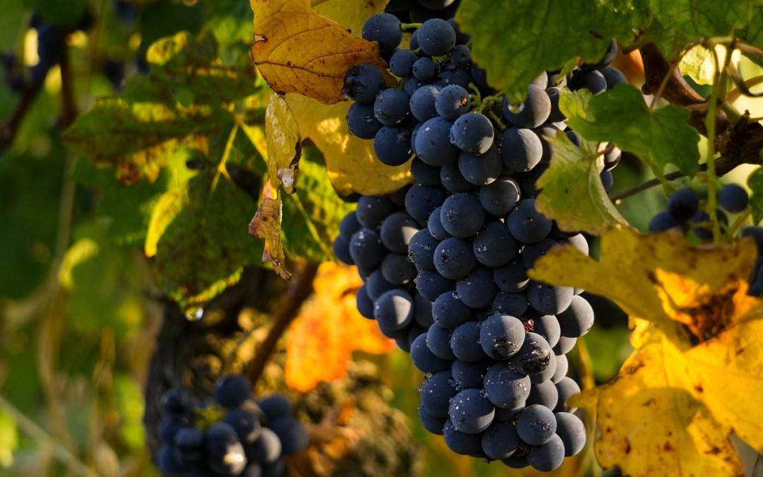 Una pelle da favola grazie a uva e vino rosso