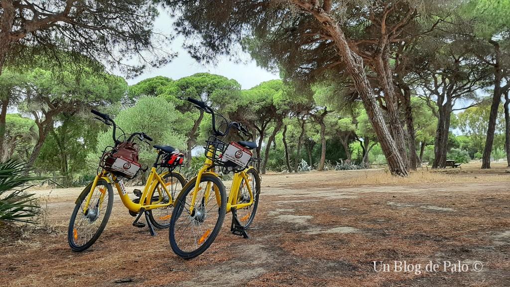 Nuestras bicis en el Pinar de Chipiona