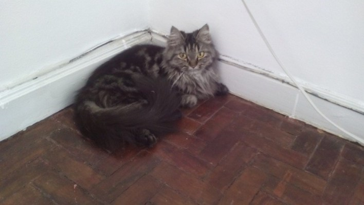 Tiffy. Our adorable cat. Hehe.