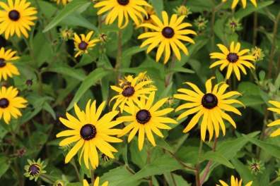 fleurs et abeille la roche guyon