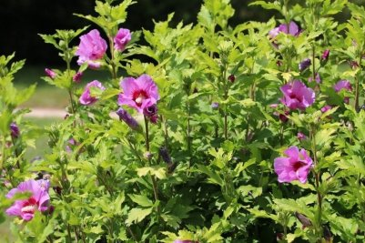 fleurs du hameau