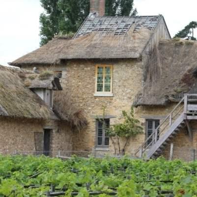 raisin du hameau