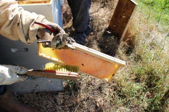 Balayer les abeilles