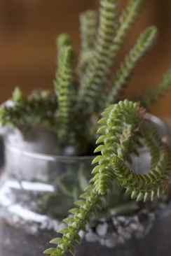 Composition avec succulentes