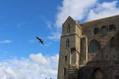 Goéland au Mont Saint-Michel
