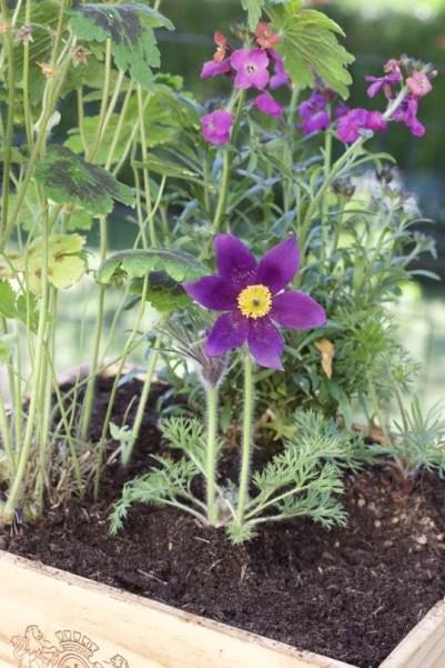 mini-jardin mauve