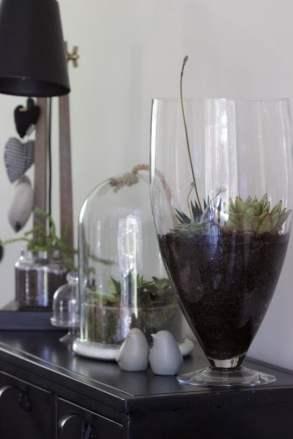 Terrarium en verre installé au salon