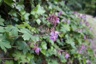 Fleurs et arbres du jardin de Monte-Cristo