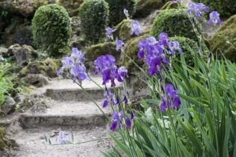 Iris du parc du château de Monte-Cristo