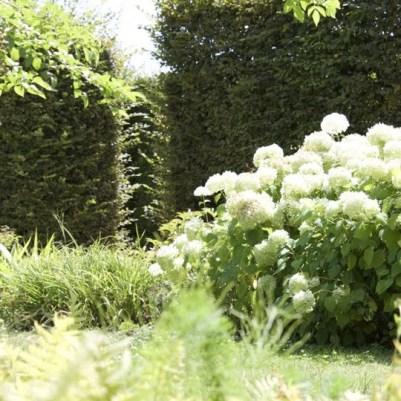 hortensias du Jardin des Princes