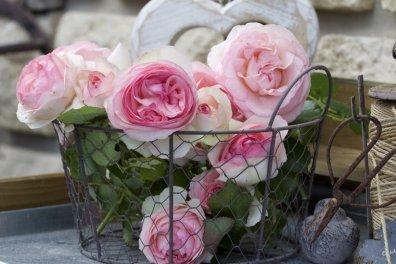 Roses Pierre de Ronsard pour un jardin Shabby Chic