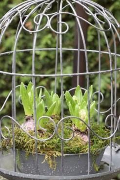 Jacinthes en cage