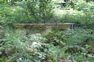 Sous-bois au château de Courances