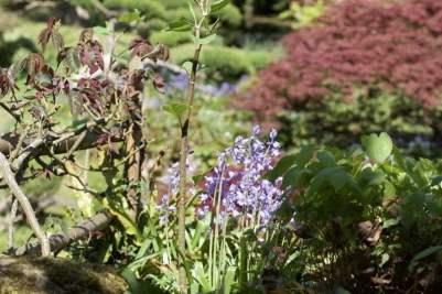 Jardin japonais du château de Courances