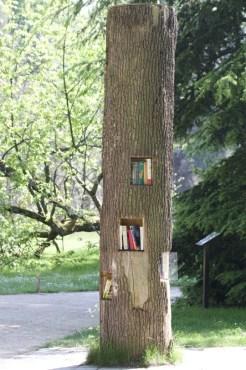 Arbre bibliothèque dans le domaine de Chateaubriand à la Vallée-aux-Loups.