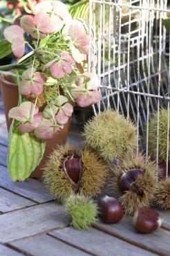 Détourner une cage à oiseaux avec des fruits d'automne