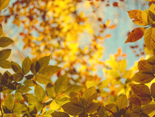 Yellow Fall Colors