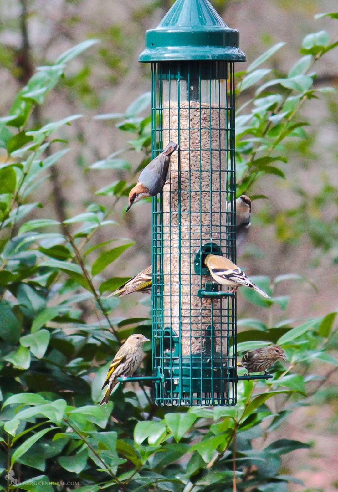 I mix of birds are enjoying the feeder.