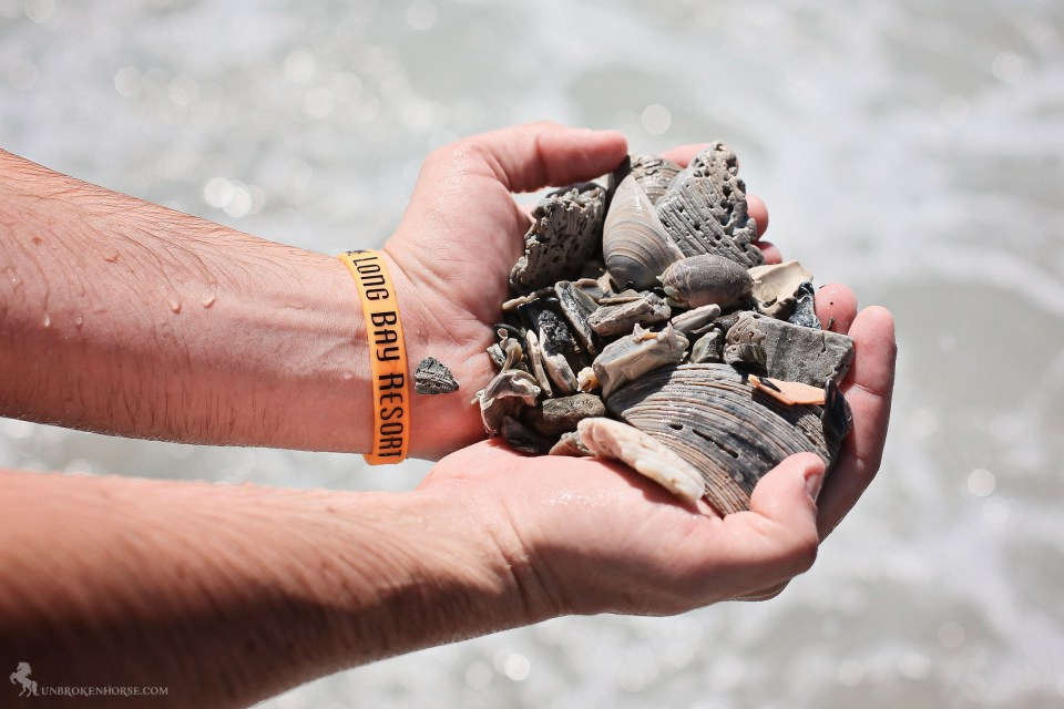Jeremy holds handfuls of shells he scoured off the bottom of the seafloor. Can you spot the sea creature?