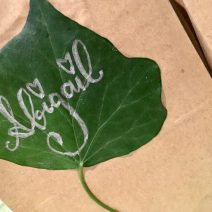 jack-and-the-beanstalk-treat-party-bags-personalised-with-ivy-leaves-use-ivy-leaves-throughout-your-decorations-for-a-joined-up-feel