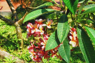 redfrangipani villa