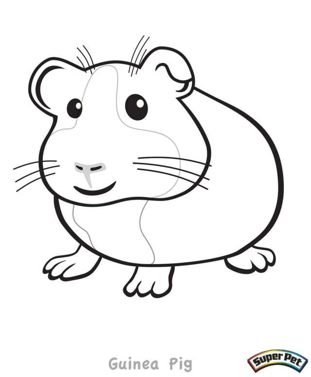 School pet guinea pig coloring pages