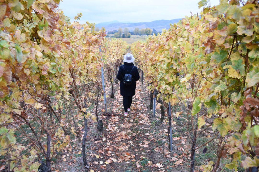 Sur la route des vins d'Alsace en France