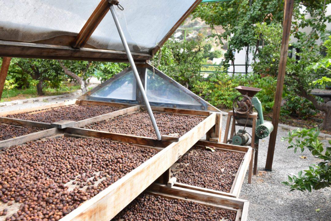 Café de Agaete-La finca la laja