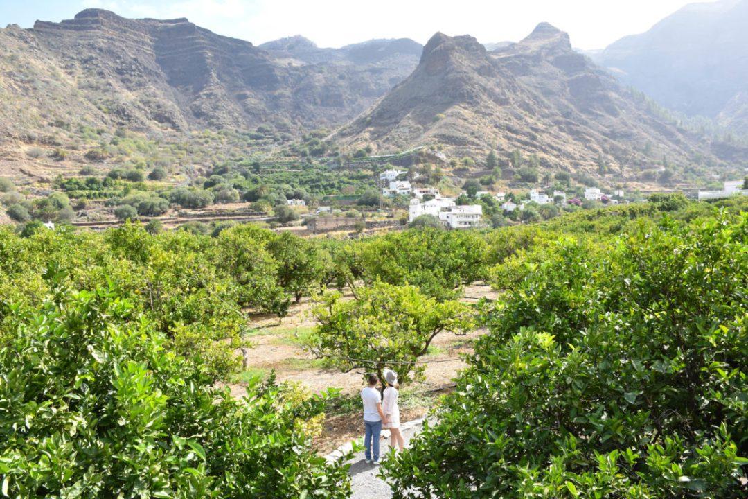 Visiter les plantations de la finca la laja