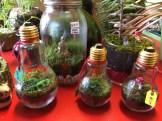 2014-11-01 The Garden Gnome Bonsai-05