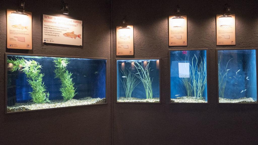 Medicine Park Aquarium - photo by Dennis Spielman