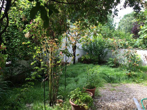 2016 Dschungel zu Hause