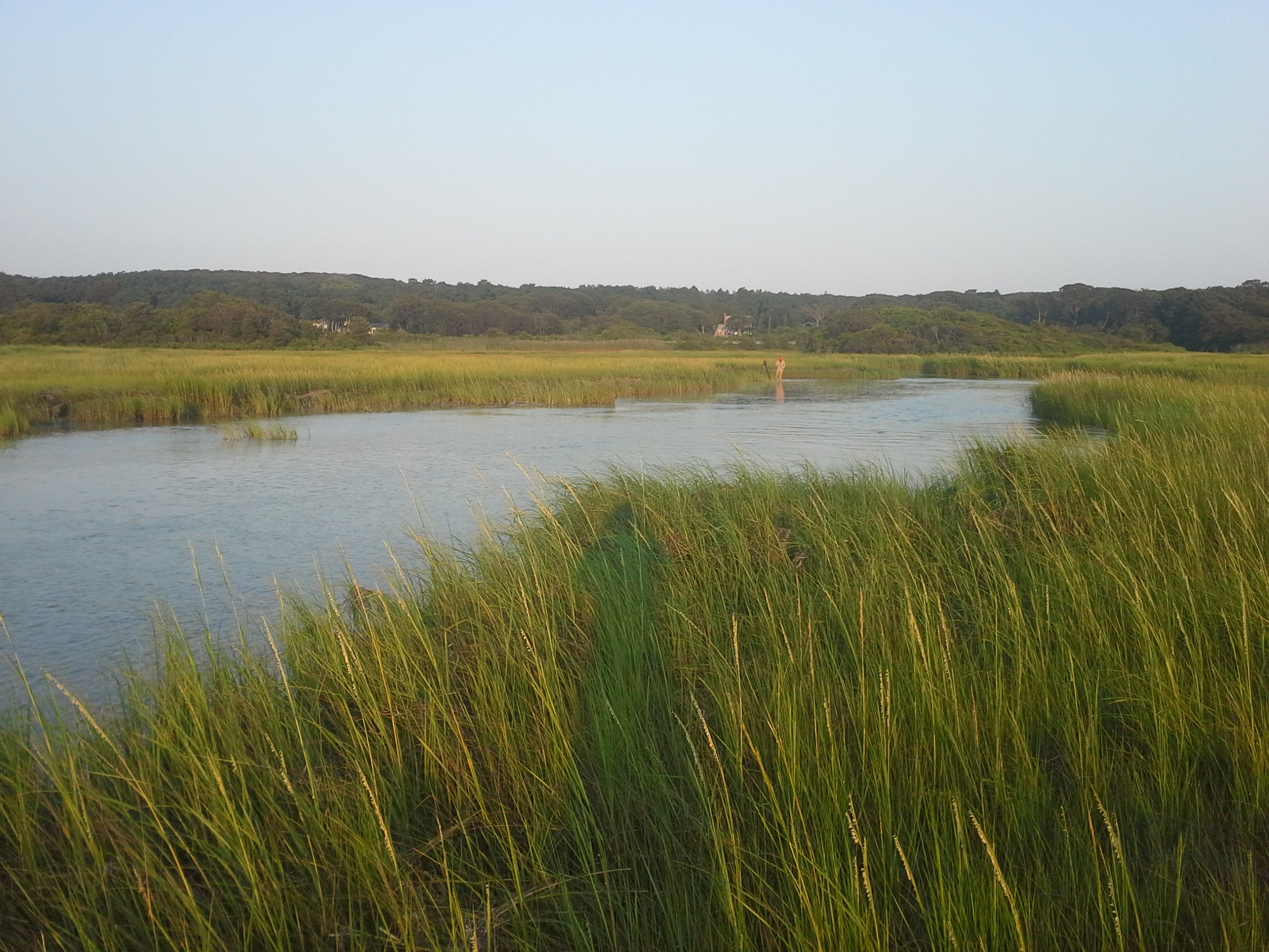 Saving Paradise: Changing Cape Cod's Groundwater